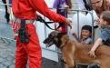 Hunde des Zivilschutzes lassen sich bereitwillig vom Publikum streicheln